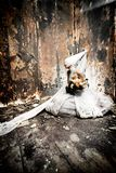 Estilo gótico Imagem de Stock Royalty Free
