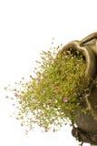 Estilo grego do potenciômetro cerâmico com as flores cor-de-rosa pequenas Imagem de Stock