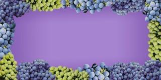 Estilo jugoso de la uva en un fondo púrpura fotografía de archivo libre de regalías