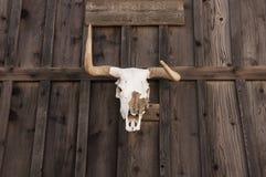 Estilo ocidental da casa da quinta da decoração da taxidermia do crânio fotografia de stock royalty free