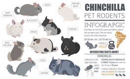 Estilo plano determinado del icono de las razas de la chinchilla aislado en blanco Barra del animal doméstico Imagen de archivo libre de regalías