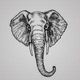 Estilo principal da gravura do elefante Um animal indiano bonito no estilo do esboço Imagens de Stock Royalty Free