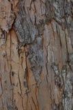 Estilo rústico de la textura de madera de Rose fotografía de archivo libre de regalías