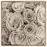 Estilo retro de las rosas de la postal Imagen de archivo libre de regalías