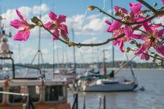 Estilo rosado de las flores Fotos de archivo libres de regalías