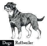 Estilo Rottweiler del bosquejo de los perros Fotografía de archivo