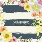 Estilo sem emenda tropical da pintura da aquarela do teste padrão das flores em b Fotografia de Stock Royalty Free