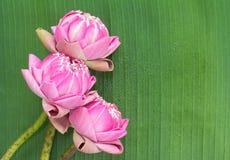 Estilo tailandés plegable del loto Fotos de archivo libres de regalías