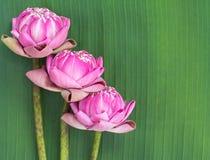 Estilo tailandés plegable del loto Imagenes de archivo