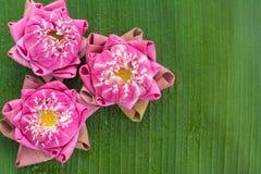 Estilo tailandés plegable del loto Fotografía de archivo libre de regalías