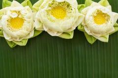 Estilo tailandés plegable del loto Foto de archivo