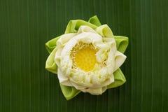 Estilo tailandés plegable del loto Fotografía de archivo