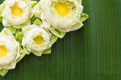 Estilo tailandês de dobramento dos lótus imagens de stock royalty free
