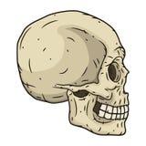 Estilo tirado humano do crânio à disposição Ilustração do vetor Imagem de Stock