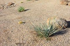 Estilo Xeriscaping do deserto Foto de Stock Royalty Free
