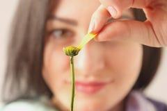 Estimation sur une fleur Photo libre de droits
