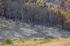 Estiramento queimado da floresta em Grécia Imagens de Stock