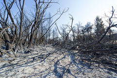 Estiramento queimado da floresta em Grécia Foto de Stock