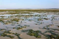 Estiramentos da areia com algas, baía de Somme, França Foto de Stock