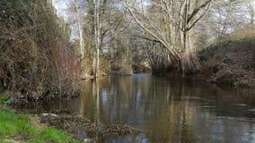 Estiramiento de un río y de árboles almacen de video