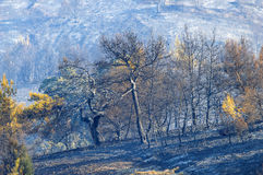 Estiramiento quemado del arbolado en Grecia Imagen de archivo