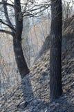 Estiramiento quemado del arbolado en Grecia Imagen de archivo libre de regalías