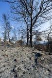 Estiramiento quemado del arbolado en Grecia Fotografía de archivo libre de regalías