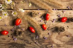 Ripe red dog-rose fruits with grass, white daisies, purple violets on an old wooden table stock photos