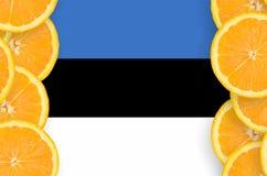 Estland flagga i vertikal ram för citrusfruktskivor arkivbilder