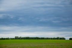 Estnische ländliche Landschaft Stockbild