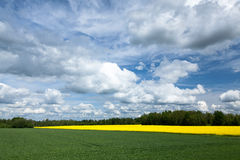 Estnische ländliche Landschaft Lizenzfreie Stockfotos