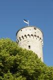 Estnische Markierungsfahne Lizenzfreie Stockfotografie
