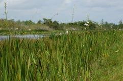Esto es un paisaje del pantano Imagen de archivo