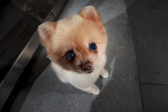 Esto es un perro lindo Imágenes de archivo libres de regalías