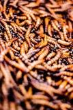 Esto es un Worms2 Fotografía de archivo