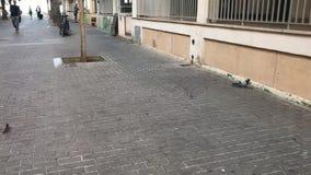 Esto es una paloma en la ciudad de Arenal almacen de metraje de vídeo