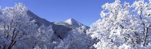 Esto está a lo largo de la ruta 198 después de una tormenta de la nieve del invierno Las ramificaciones de árbol se cubren en nie Foto de archivo