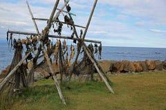 Estocafís en Islandia Fotos de archivo libres de regalías