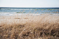 Estonia. Baltic sea nature landscape Stock Images