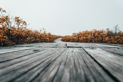In Estonia beach wooden walkway near Baltic Sea with fog over the sea stock images