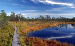 estonia natury bagna viru obraz royalty free