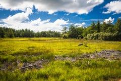 Estonia. The wild nature Saaremaa island, Estonia royalty free stock images