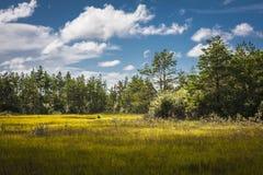 Estonia. The wild nature Saaremaa island, Estonia royalty free stock photography