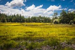 Estonia. The wild nature Saaremaa island, Estonia stock photography