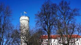 Estonian flag on historical tower stock video