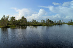Estonian lake. Beatiful nature in Estonia. royalty free stock photo