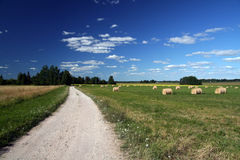 Estonian landscape. Landscape with blue sky and white clouds Stock Photography