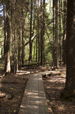 estonian skog för boardwalk Royaltyfri Foto