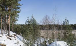 Estonian winter northern forest landscape. Estonian winter northern landscape with a pine-tree and snow covered hill on the foreground Stock Photos