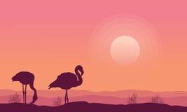 Estoque da coleção do cenário do flamingo da silhueta Fotos de Stock